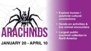 The Art & Science of Arachnids