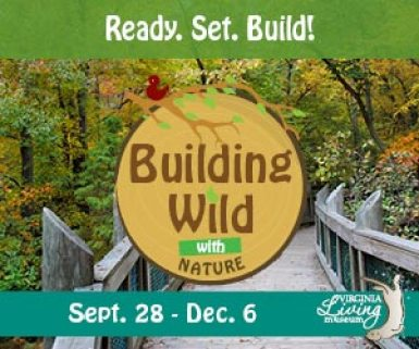 Building-Wild-with-Nature