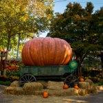 Busch Gardens Halloween Harvest opens October 1