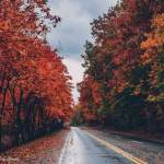 Fall Foliage in Virginia - When is best time to see the leaves change in Williamsburg?