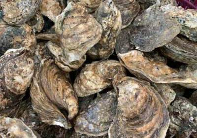 oyster-festival-watermens-museum