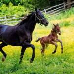 rare-breed-program-at-colonial-williamsburg