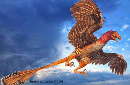 A Czerkas dino, comlete with feathers