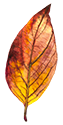 autumnleaves3-125