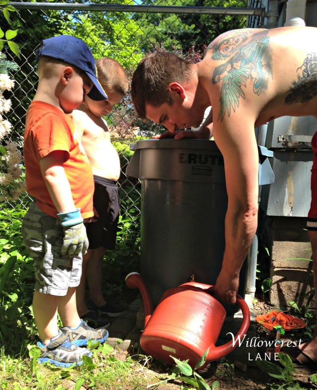 Filling up the watering cans with water from the rain barrel .