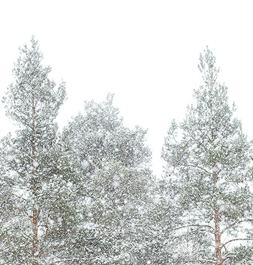 snowy-day-ig