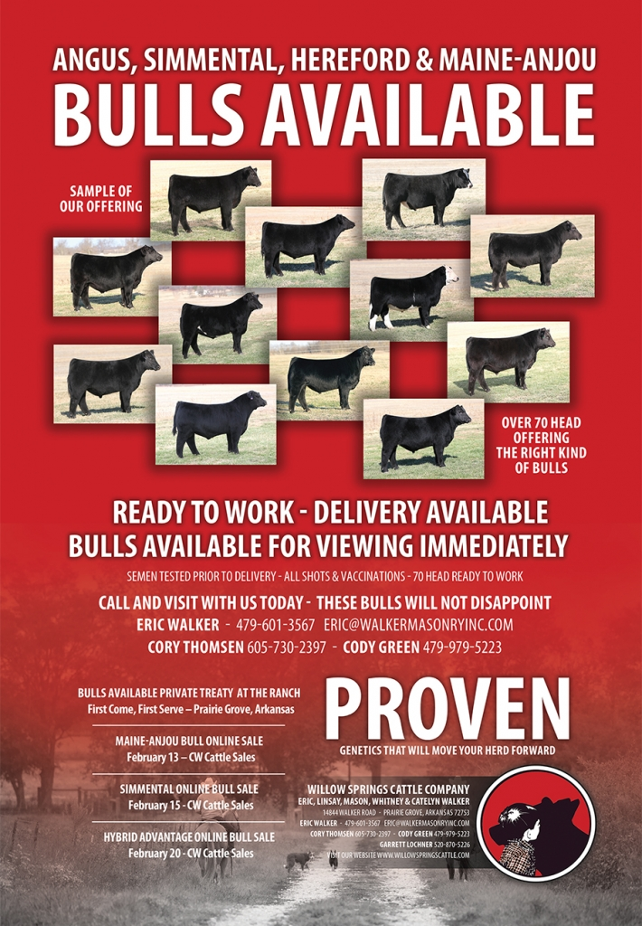 ONLINE WITH CW CATTLE SALES