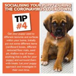PUPPY SOCIAL 4