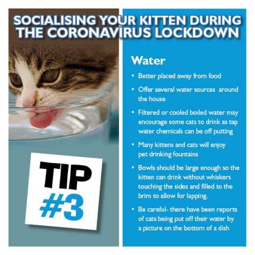 Kitten Tip 3