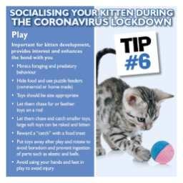 Kitten tip 6