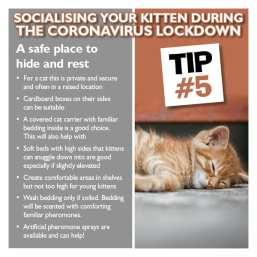 kitten tip 5