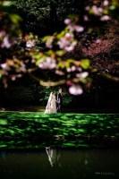 011 - wedding photos cherry blossom vancouver