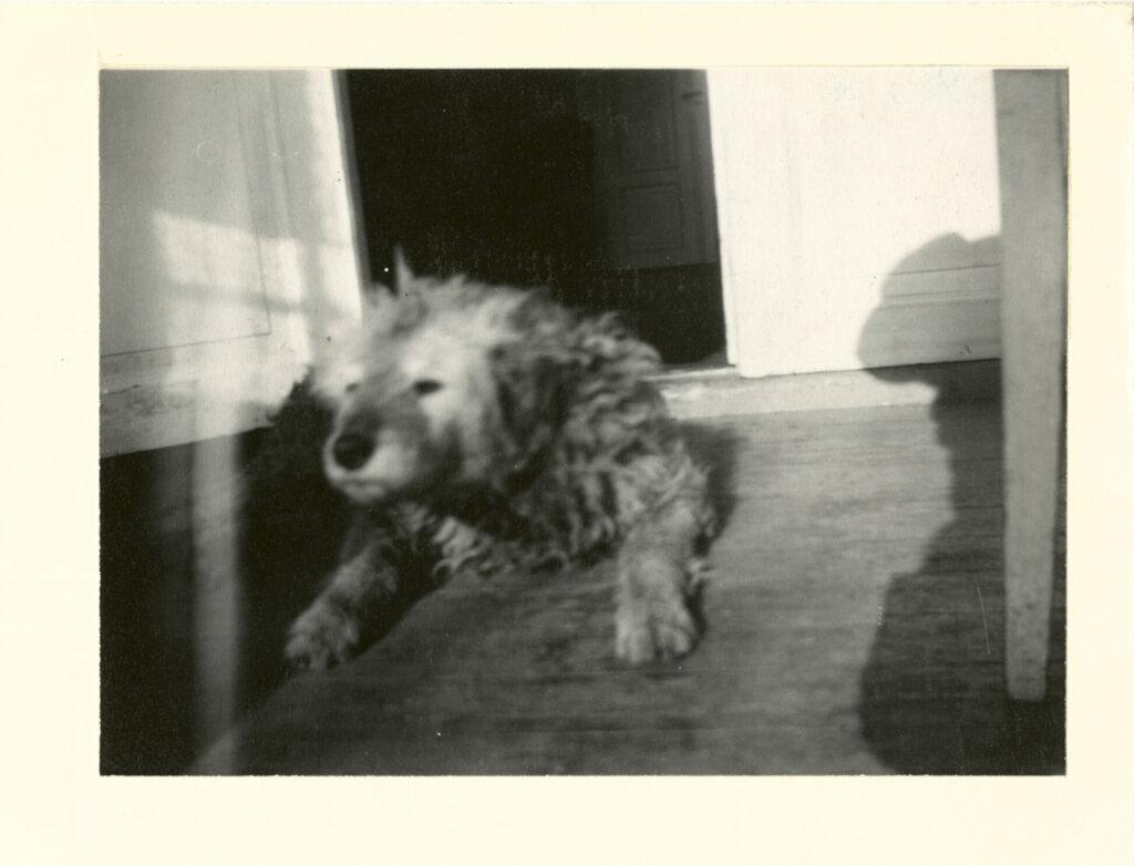 Edvard Munch. Fips på verandaen, Ekely 1930. Foto: Munchmuseet