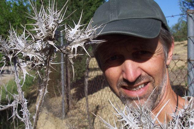 Thorns & thistles...