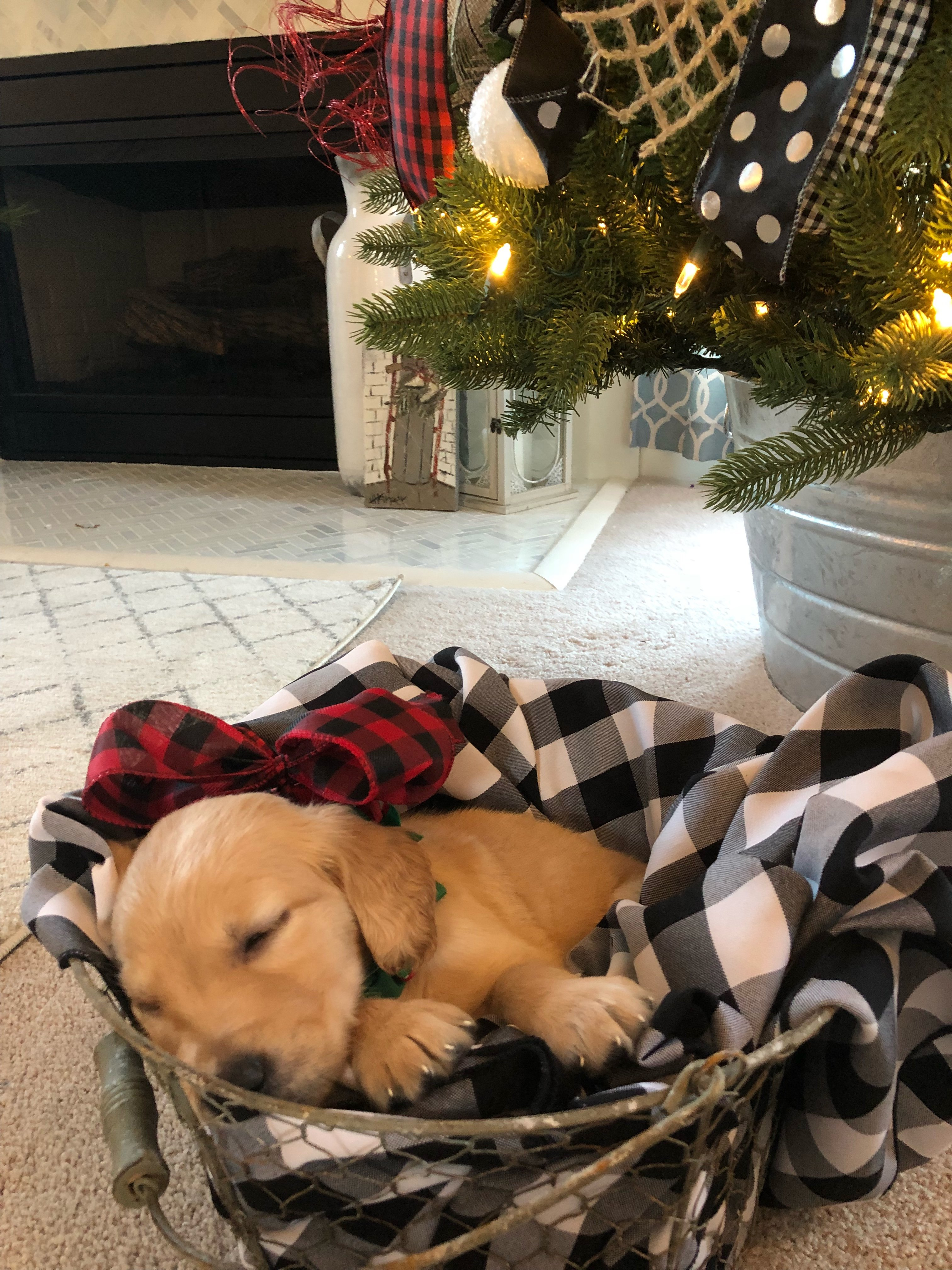 Christmas Surprise Puppy How We Pulled It Off And Got Our