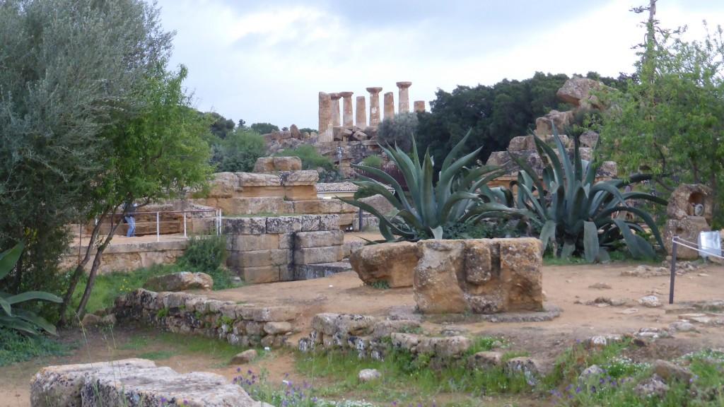 P1070443 Valle dei Tempi - Agrigento
