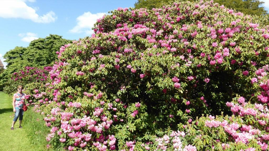 P1080283 Lismore Castle and Garden