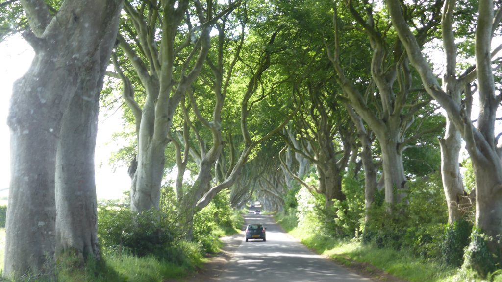 P1090319 The Dark Hedges