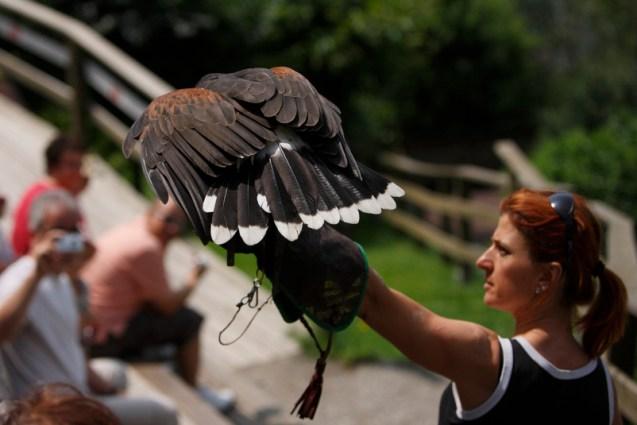 Pflegezentrum für Vogelfauna Schloß Tirol