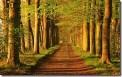 Bomen langs een weg (Trees on a country road)