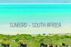 SUNBIRD SOUTH AFRICA