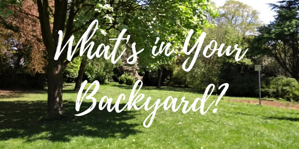 Photo of park with text - what's in your backyard