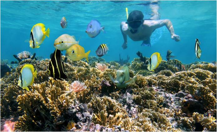 Martinique Excursion au Robert en location bateau