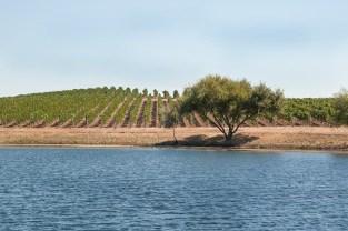 Browns Ranch Vineyard, Rentería Wines.