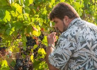 Napa Valley Harvest 2015 - Mumm Napa Winemaker Lidovic Dervin trying Pinot Noir grapes at the Game Farm Vineyard (Edgar Solis)