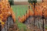 Wente Estate Vineyards (Courtesy of Wente Vineyards )