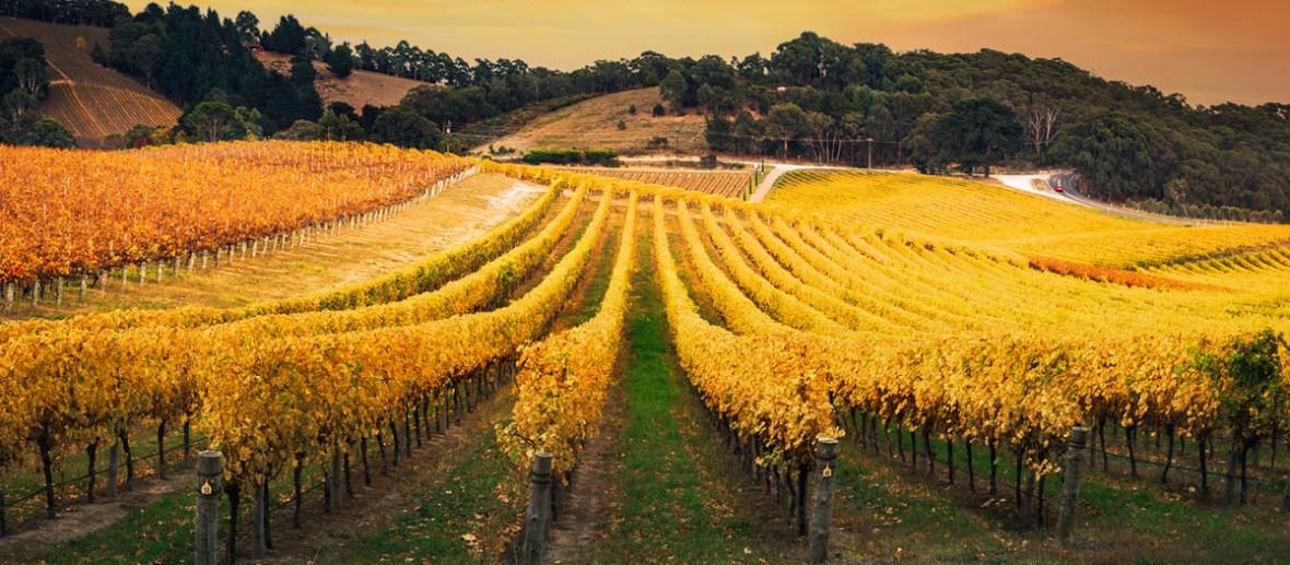 Austrália: uma joia do Novo Mundo   Winepedia