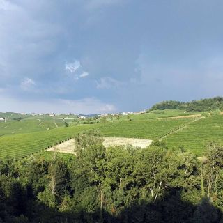 Barolo vineyards. July 2016.