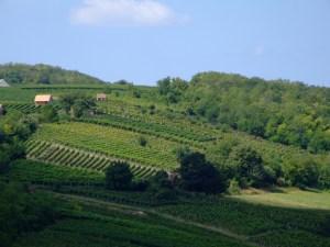 Vineyard hills of Villany by Jerzy Kociatkiewicz, licensed under CC BY-SA 2.0