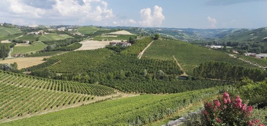 Vineyards in Piemonte