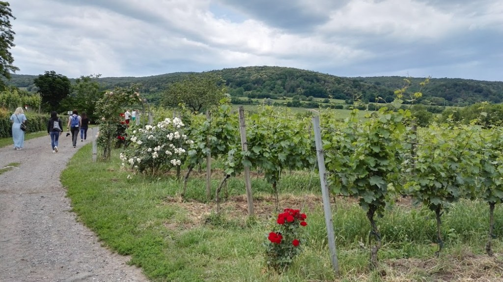Walk in the Mosbacher vineyards, Pfalz.