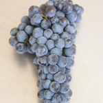 Cabernet Franc Bunch