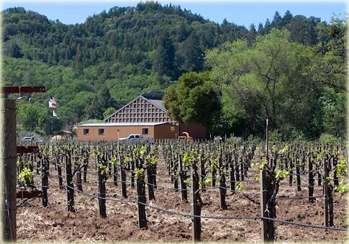 quivira-vines