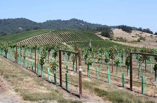 Abecela winery