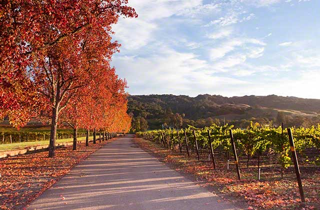 From now through November it is fall color time in wine country