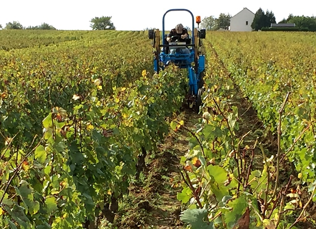 burgundy vineyard tractor