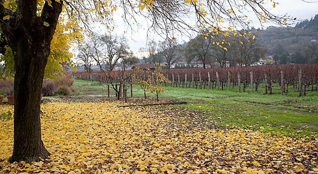 winecountry-december