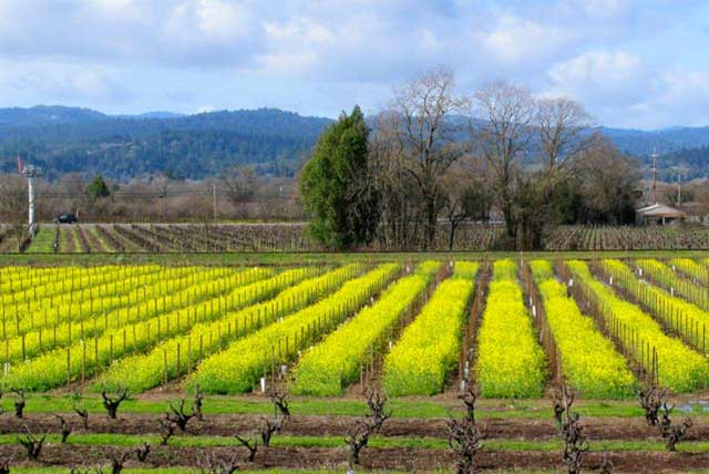 Feb weather in wine country