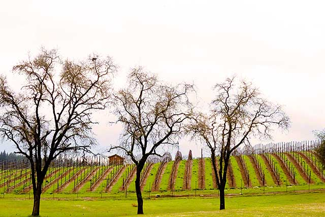 march weather wine country