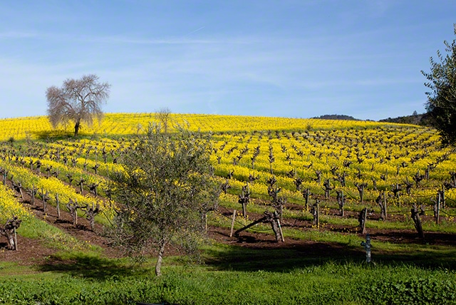 Sonoma valley wine country