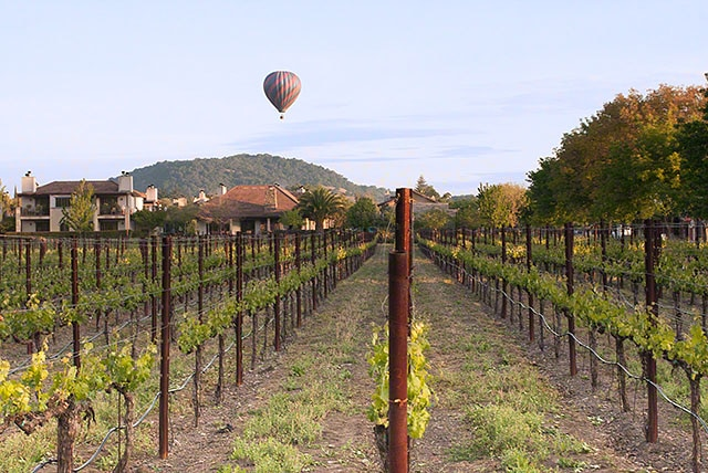 Napa Valley ballooning and other fun stuff