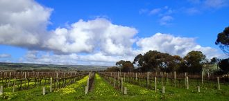 McLaren Vale Like a Local Travel Guide