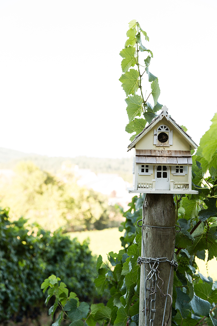 Birdhouse amidst the vines at Zenith Vineyard / Photo by Chris Low