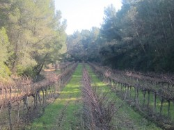Wine Pleasures visits Finca Valdoserra 1