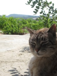 Wine Pleasures visits Celler Avgvtvs with the cat