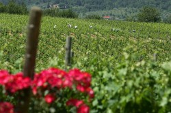 Wine Pleasures visits Tuscany